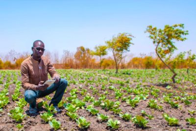 Baobab, Creating Strong Roots for Inclusive Financial Services